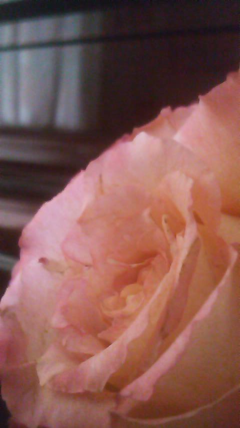 知り合いから頂いたお花を飾ってみました