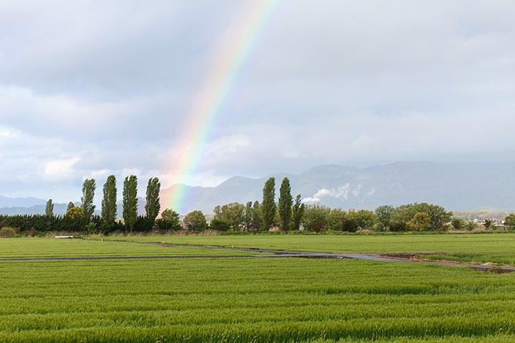 心が綺麗になった気がして若返る気がするから青い空に虹ができるのが好き!
