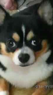 最近、飼っている犬の病気がだんだんよくなってきました
