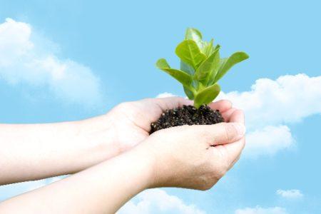アフィリエイトで初報酬を獲得された方の感想!「種を撒き、水をやり、育てて、成果物を手に入れる。」が大事!