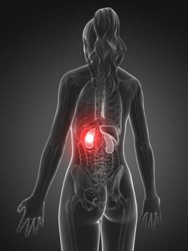 ミトコンドリアと腎臓の関係とは?腎臓機能を復活させるミトコンドリア