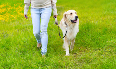犬の散歩ダイエットについて。半年で4キロ痩せることが出来ました。