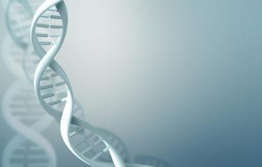 ミトコンドリアには遺伝子が関係している?自力では増えない