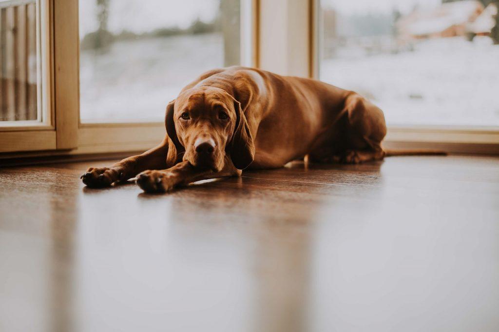 犬の目の老化、加齢性白内障に、口コミ良しの「Nアセテルカルノシン点眼薬 CAN-C 犬用」は偽物が出回っている情報もあるとのこと!ご注意下さい。正規保証品はビューティーアンドヘルスリサーチで買える!